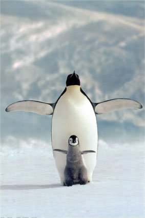 Penguin Picture - Penguin and Chick