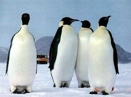Penguin Picture - Penguin Group