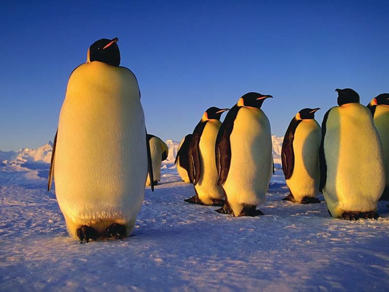 Penguin Picture - Penguins Relaxing
